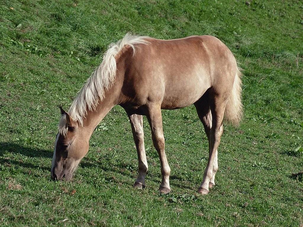 Grazing-Horse-2-1024x768