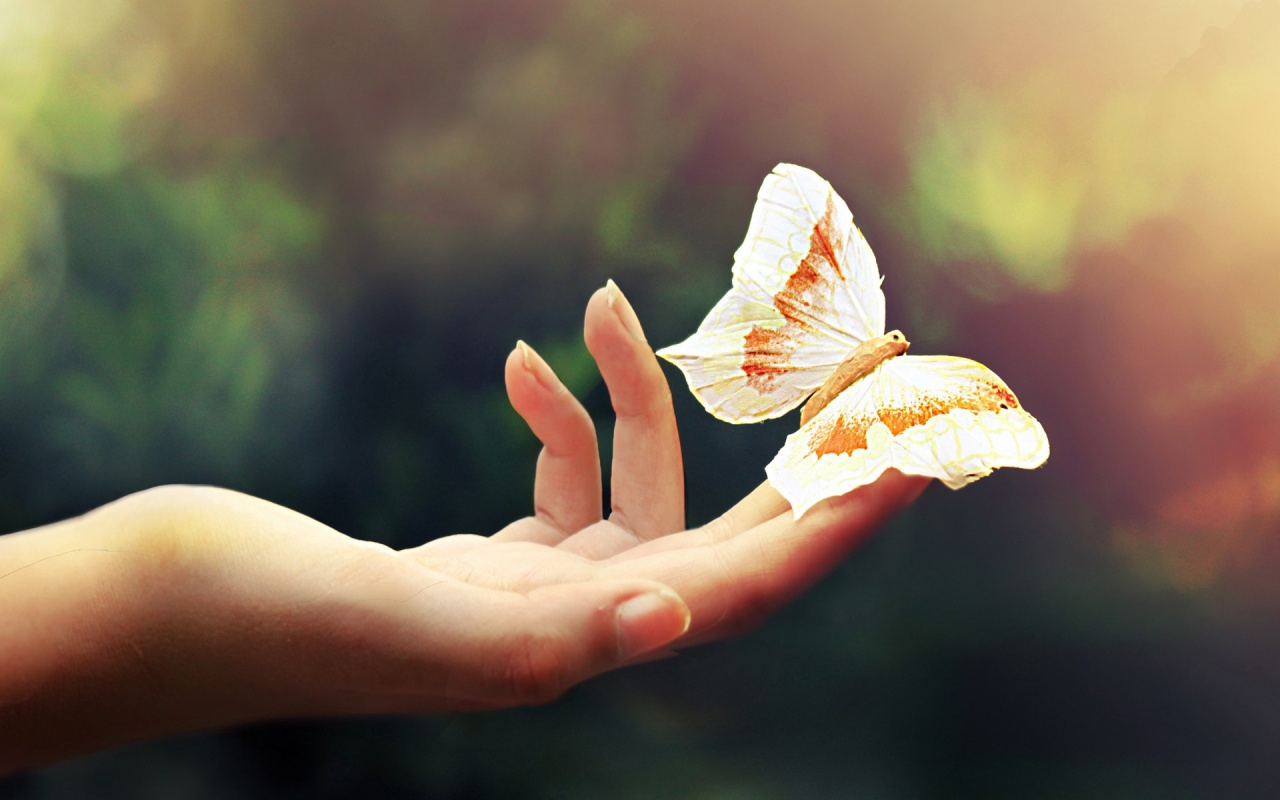 butterfly_on_hand-1280x800