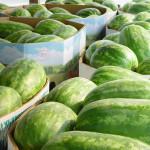 Watermelon2l