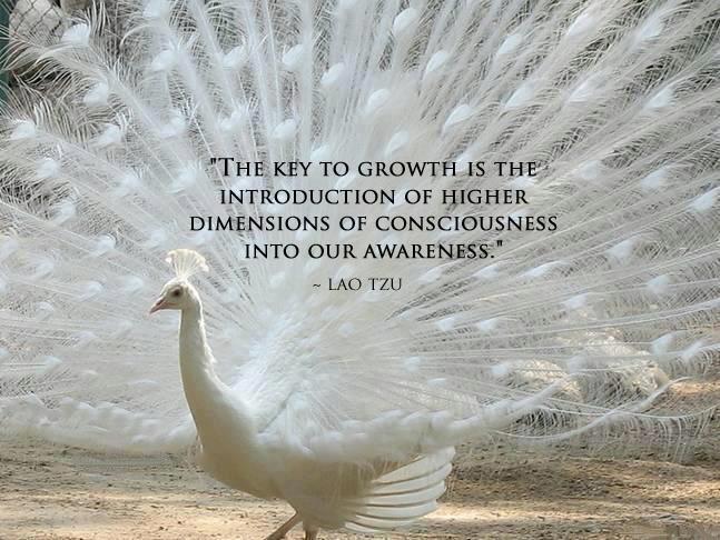 higher-consciousness
