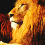 lion-totem-300