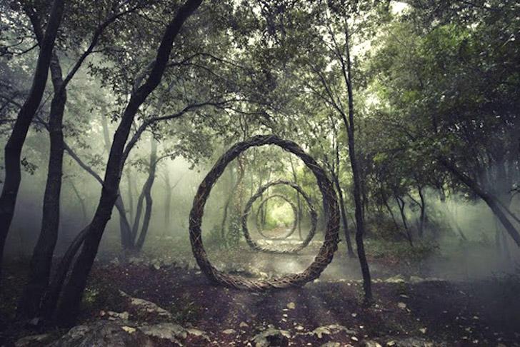 Fantastic Forest By Spencer Byles 0
